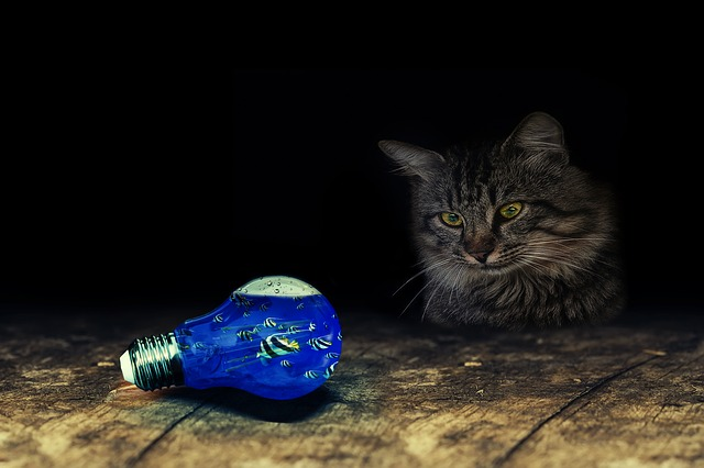 modrá žárovka