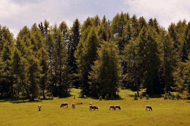 Pastviny pri lese.jpg